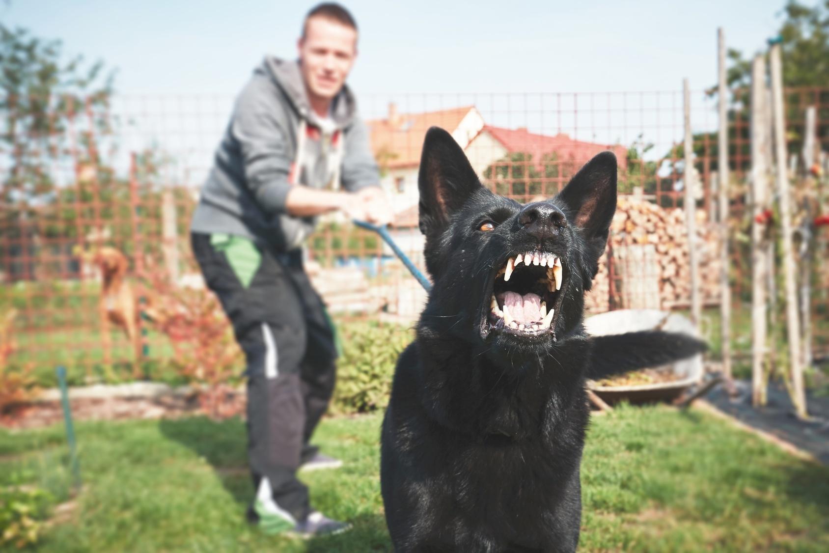 Man holding aggressive dog back on leash