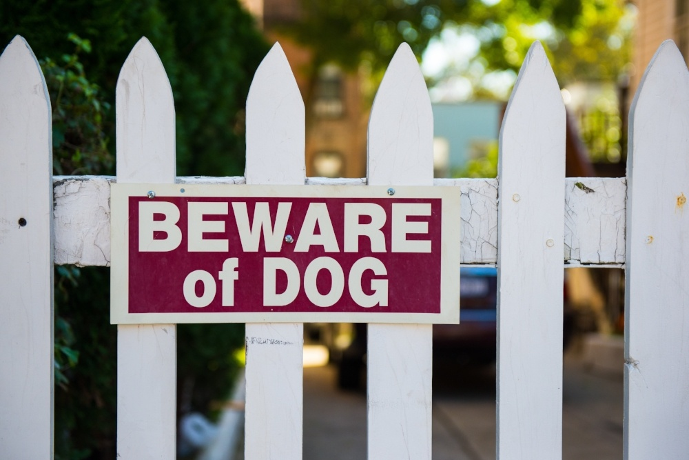 What happens if a dog bites me in Florida?